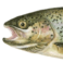 Illustration du profil de Forel Tully