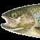 Illustration du profil de Forel Tully
